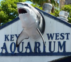 The Key West Aquarium