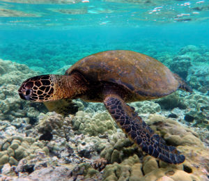 Learning About Key West Sea Turtles